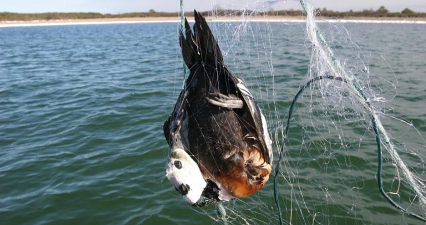 Seabird bycatch